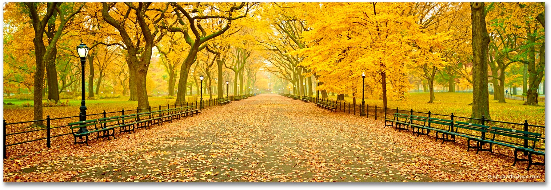 Central Park New York Panoramic Fall Autumn Literary Walk High Definition Hd Professional Landscape Photography Abilities Network